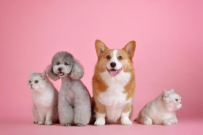 pets-blog
